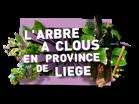 L'arbre à clous en Province de Liège